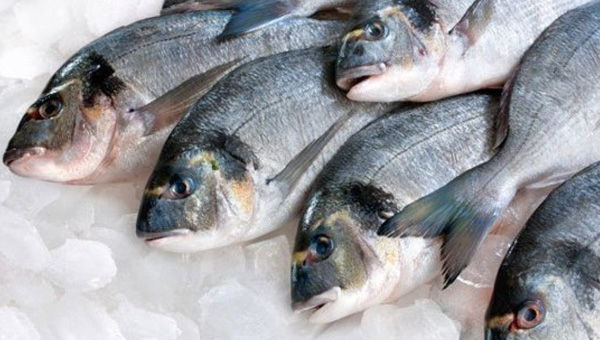 What does fresh fish contain?