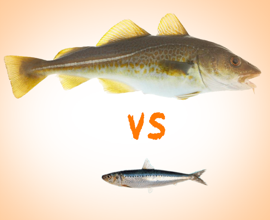 Cod liver oil vs fish oil research nutrition for Cod fish nutrition